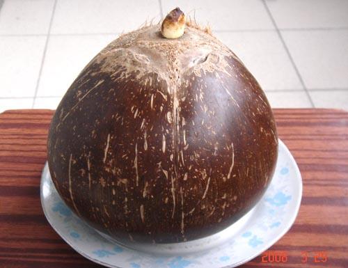 椰子怎么吃固)��)�h�_椰子怎么吃【相关词_ 椰子怎么打开】